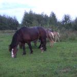 Cелекция лошадей